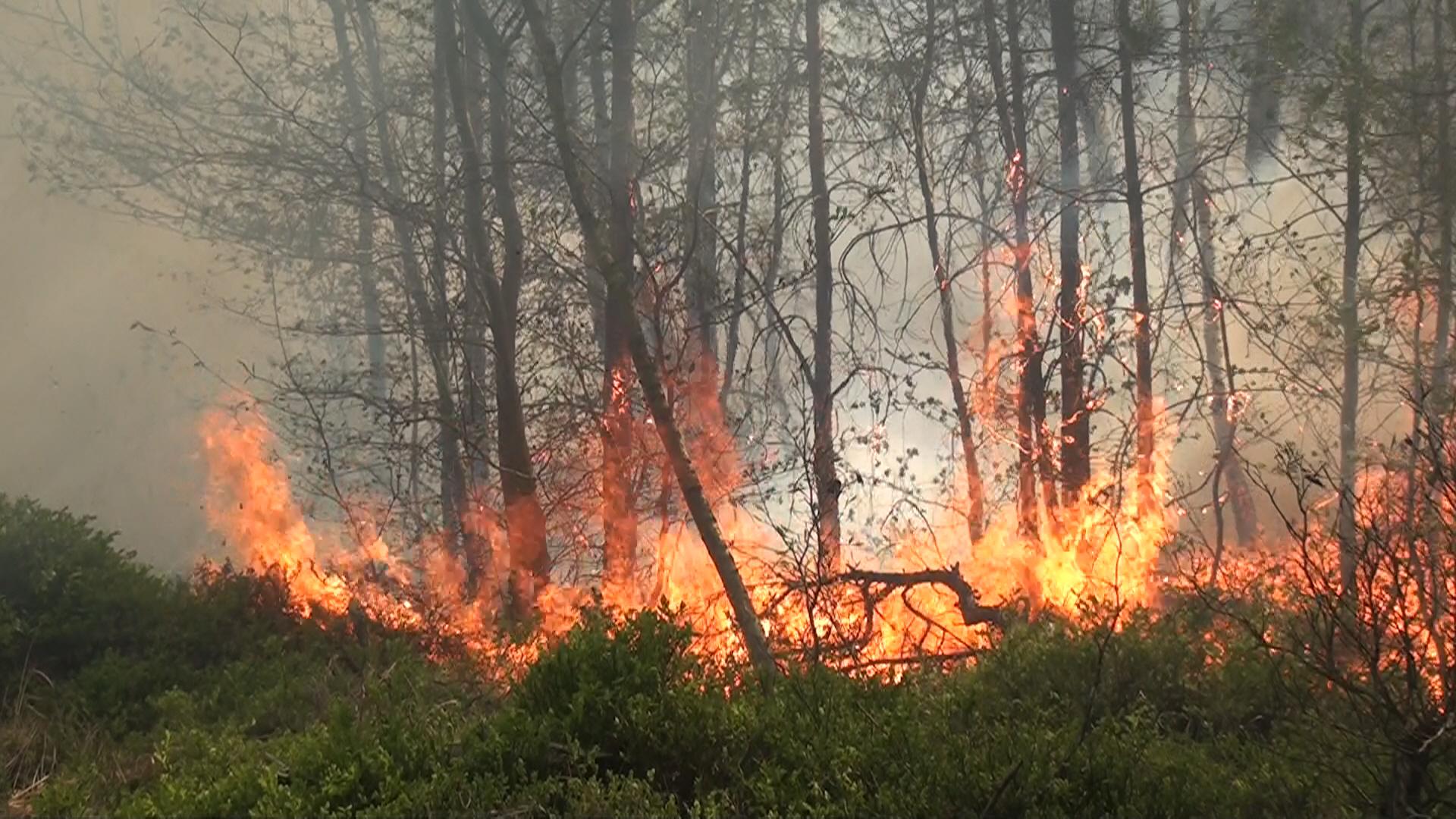 Schweden Waldbrände Karte.Verheerende Waldbrände In Schweden 2018 News Wetter24 De